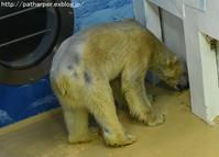 2016年12月 白浜パンダ見隊 その2 午後の突発的体重測定 - ハープの徒然草