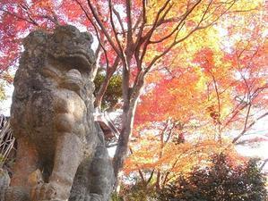 秋の風景 - ~AKARIの徒然仕事~