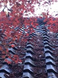 もう少しだけ・・・浄智寺、鎌倉 - ヴェネツィア ときどき イタリア・2