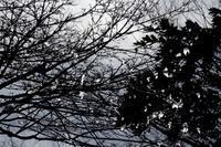 重い雪 - Yoshi-A の写真の楽しみ
