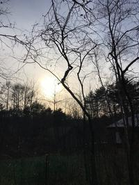 暮の火の粉 - 木洩れ日の森から