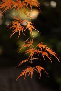 長泉院 秋色  - 風の彩り-2