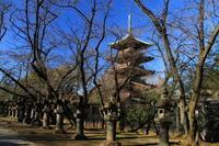 上野東照宮 - お散歩写真     O-edo line