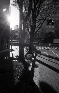 冬の西陽 - 心のカメラ / more tomorrow than today ...