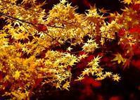 D2Hによる紅葉 - kenihの部屋 (流浪する魂)