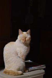 寝猫15 - オムイと森羅万象