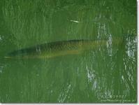 【き】巨大な魚:きょだいなさかな - ネコニ☆マタタビ