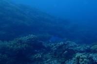 16.12.18 本職の、週末 - 沖縄本島 島んちゅガイドの『ダイビング日誌』