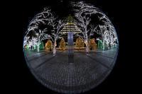 京セラ本社イルミネーション2016 「積雪の光の森」と巨大クリスマスツリー(写真部門) - 花景色-K.W.C. PhotoBlog