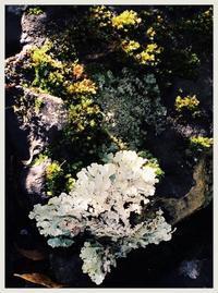 苔の世界〜静けさの中の美しき命 - 書家KORINの墨遊びな日々ー書いたり描いたり