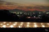 天理市 電飾イチゴハウス - ぶらり記録(写真) 奈良・大阪・・・
