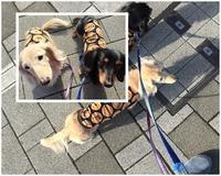 16年12月19日 おもろなおばちゃん&危ないわぁ;^^ - 旅行犬 さくら 桃子 あんず 日記