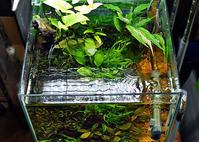 筆録(ひつろく)30cm水槽。。。 - Trial and Error → Aquarium