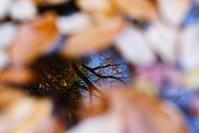 映る秋 - 幸せな写真時間