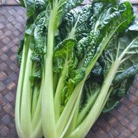 雪菜 - 料理研究家ブログ行長万里  日本全国 美味しい話