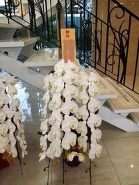 今年のうちにお引越し~!胡蝶蘭のお祝いが年末に増えています。 - ルーシュの花仕事