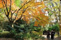 六義園(黄色) - くろちゃんの写真