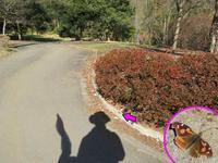 暖かさにつられたテングチョウ - 秩父の蝶