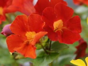 誕生日の花 - ソランのブログ