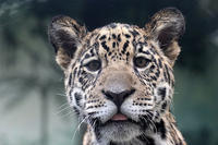 「佐助」と「小助」 - 動物園放浪記