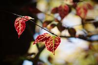 紅い葉 - 花と風景 Photo blog