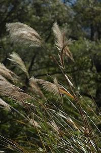 強風の日 - 空ヤ畑ノコトバカリ