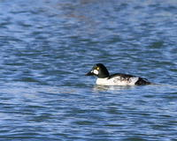 なまえどうりです。!!湖北 - 季節の鳥達