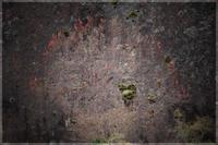 岩を這う蔦 - 写真画廊 ナカイノブカズ 2