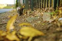 界隈猫景色#48 - 寫憬