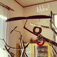 プルメリアの種 - manmaru Ribbon ~ Pili aloha Lei Making ~