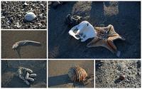 海からの贈り物 -  one's  heart