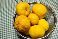 柚子ジャム&柚子茶 - こぶたのノンビリ生活