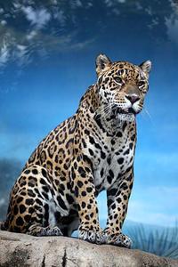 ジャガー一家の主 - 動物園放浪記