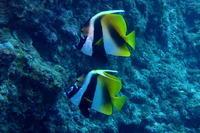 16.12.22 前線通過で - 沖縄本島 島んちゅガイドの『ダイビング日誌』