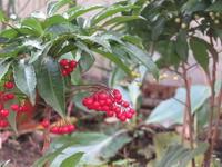 冬の寂しい庭に - 光さんの日常