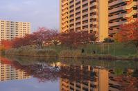 東京の川1 - はーとらんど写真感