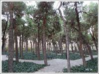 パーケラレ(ラレ公園)の松 - テヘランのアルバム