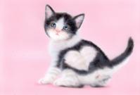 リアリズム絵画:ハート模様の子猫「はちわれハート」:メイキング - junya.blog(猫×犬)リアリズム絵画