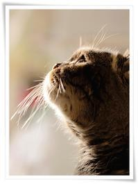 ― 春待月の もの想い ― - 風のうた 猫の呟き