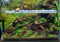 筆録(ひつろく)45cm水槽。。。 - Trial and Error → Aquarium