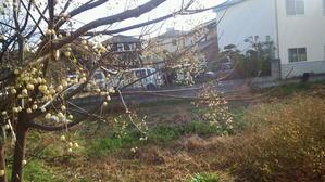 昨日は風が強いと思ったら - ネッツトヨタ兵庫広畑U-Car店BLOG