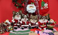 12月24日(土) Merry Christmas  !! - ほのぼの動物写真日記