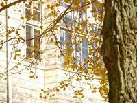 廃校舎と銀杏の木 2 - いつかみたソラ