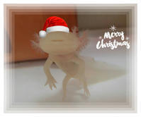 Merry Christmas! - 犬が西向きゃ尾は東♪