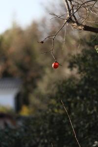 柿の実ひとつ - Windpath