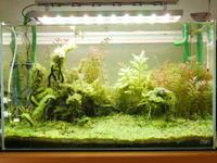 100円ガラス容器で水上葉 - 水草新世界