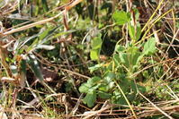冬至が過ぎ - 週刊「目指せ自然農で自給自足」