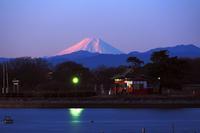 朝富士に、ハクチョウを絡める・・・絶景多々良沼♪ - 『私のデジタル写真眼』