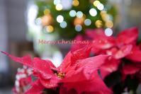 *Merry Christmas* - aco* mode
