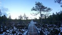 幻想的!エストニア【ラヘマー国立公園・ヴィル湿原】でお気軽トレッキング(旅行・お出かけ部門) - ! Buen viaje!(ブエン ビアーへ)旅と猫
